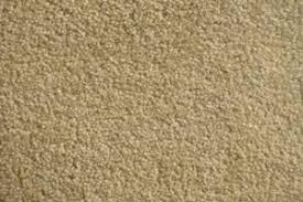 venice plush velvet carpet sles