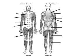 2 muscles worksheet hste project identifying muscles worksheet