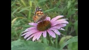 native plants in illinois new jersey highlands native plants and their habitats youtube