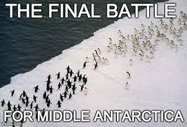 Cute Penguin Meme - the online penguin funny penguin gallery