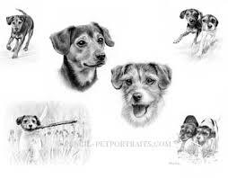 pencil pet portraits pet portraits by melanie phillips