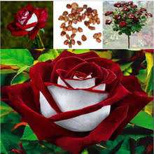 gift tree free shipping buy ruby tree and get free shipping on aliexpress