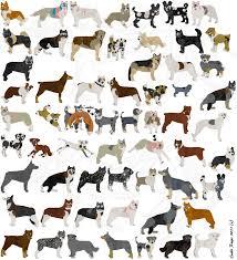petz 5 australian shepherd esaki u0027s dogz 4 doggies by esaki on deviantart