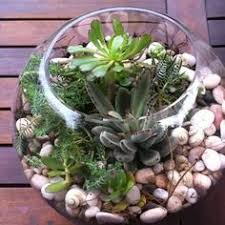 http www ireado com how to make beautiful succulents and where