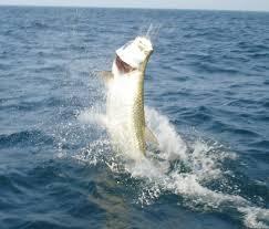 fish for bruce page 247 backyard galah cam