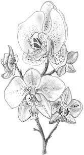 best 25 flower sketches ideas on pinterest flower illustrations
