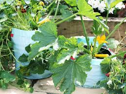 5 gardening mistakes diy network blog made remade diy