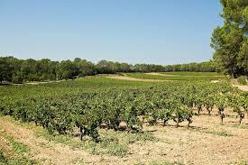 chambre agriculture du var château mentone wine in provence farmhouse inn