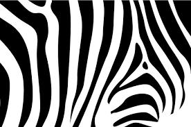 zebra pattern free download zebra background free vector in encapsulated postscript eps eps