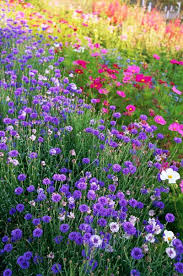 wild flower garden images breathtaking best 25 gardens ideas on