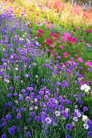 wild flower garden images far fetched best 25 meadow ideas on