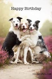 Happy Birthday Meme Dog - three dog happy birthday wishes image picsmine