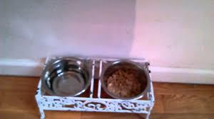 royal canin folly puppy food youtube