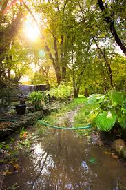 what to do for waterlogged or flooded gardens