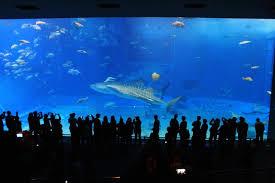 japanese aquarium one of the most popular aquarium in japan okinawa churaumi aquarium