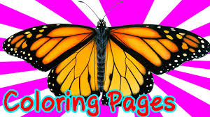 coloring books for kids butterfly pictures free coloring book