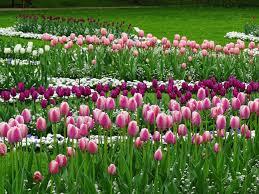 Blumen Baden Baden Baden Baden