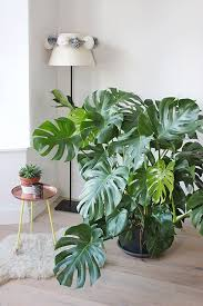 home interior plants best 25 tropical house plants ideas on outdoor palm