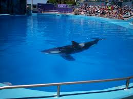 Six Flags Dolphin Swim Without Me There Is No You Just Another Wordpress Com Site Page 4