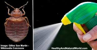 Bed Bug Sprays The Best Bed Bug Sprays To Kill Bed Bugs Fast