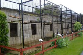 wellplace parrot aviaries zoochat