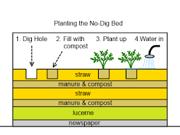 How To Plant A Raised Vegetable Garden by No Dig Gardening Deep Green Permaculture