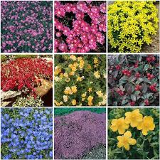 Backyard Ground Cover Options 104 Best Groundcovers Images On Pinterest Landscaping Ideas