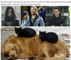 Hilarious Memes Tumblr - just 100 freaking hilarious memes about the marvel movies