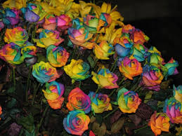 multicolor roses multicolor roses photo katwilkens photos at pbase