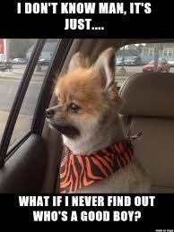 I Don T Know Man Meme - i made a reddit op s dog into a meme meme on imgur