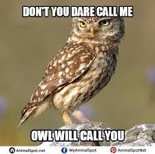 Art School Owl Meme - owl meme png