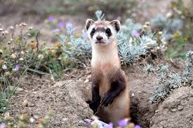 Colorado wildlife images 6 things everyone should know about wildlife conservation jpg