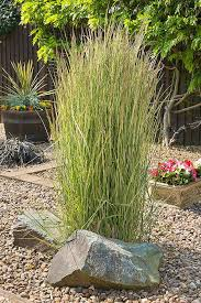 easy landscaping with ornamental grasses gardener s path