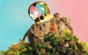 Cute Spiders Phil Ebersole S - beautiful spiders phil ebersole s blog