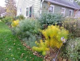 native plants of arkansas a corner garden