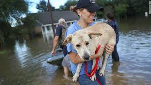 louisiana flood worst us disaster since hurricane sandy red