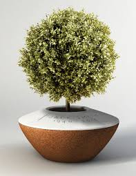 cremation tree this organic urn turns your ashes into a tree after you die the