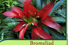 Tropical Rainforest Plant List - these vibrant amazon rainforest plants will take your breath away