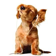 Dogs pictures / fotografije pasa - Page 3 Images?q=tbn:ANd9GcR3yAltrbdF42y0e2tQF_HdoDW-8l7v5nf0V4ALdaK7TtG2wE_X