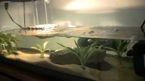 20gallon painted turtle tank youtube