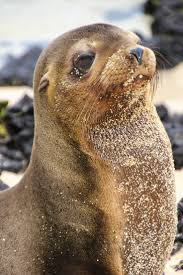 57 best a foca na images on pinterest animals sea lions