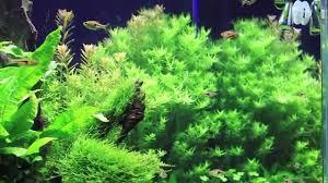 10 gallon planted tank led lighting full led planted aquarium diy aquasky lamp youtube