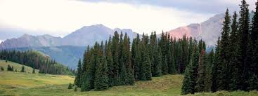 colorado trees colorado state forest service