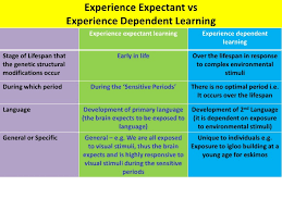 experience dependent brain growth sensitive periods and experience dependent learning vce u4 psych ao