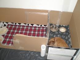make your own dog toy box