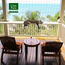 katzenschutz balkon casa pura katzennetz mit befestigungsseil katzenschutz für