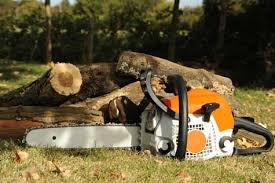 how to start a tree service commercial tree removal and planting