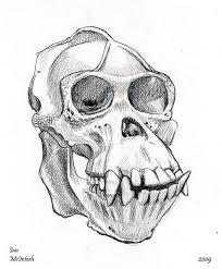 artstation monkey skull ian mcintosh