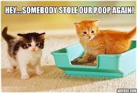 Lolcat Meme - lolcats poop lol at funny cat memes funny cat pictures with