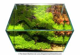 Green Machine Aquascape Hraquascape Org članci Interview With James Findley